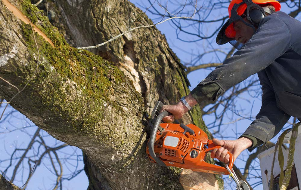 Residential Tree Trimming and Removal in Houston